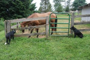 Texas and Tennessee keeping tabs on the horses for me.