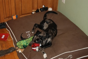 Chism hoarding her stash of toys.
