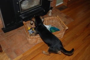 Charm selects a toy from the basket...