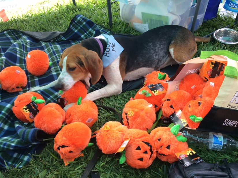 Of Puppies and Pumpkins
