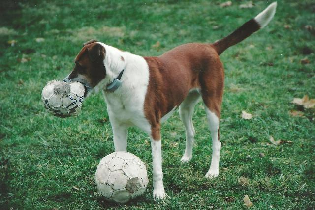 lucy with soccer balls