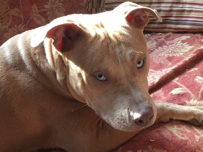 Open Letter to My Pitbull-OwningNeighbor