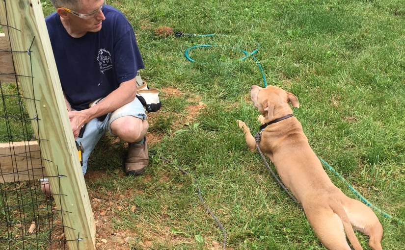 Puppy Play Yard
