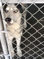 shelter friend dog 3