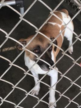 shelter friend dog