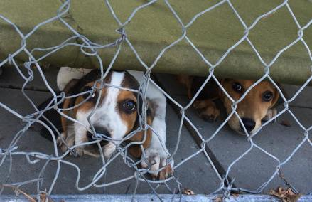 shelter friend parvo pups