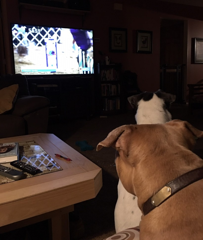watching AKC Agility finals with Frankie