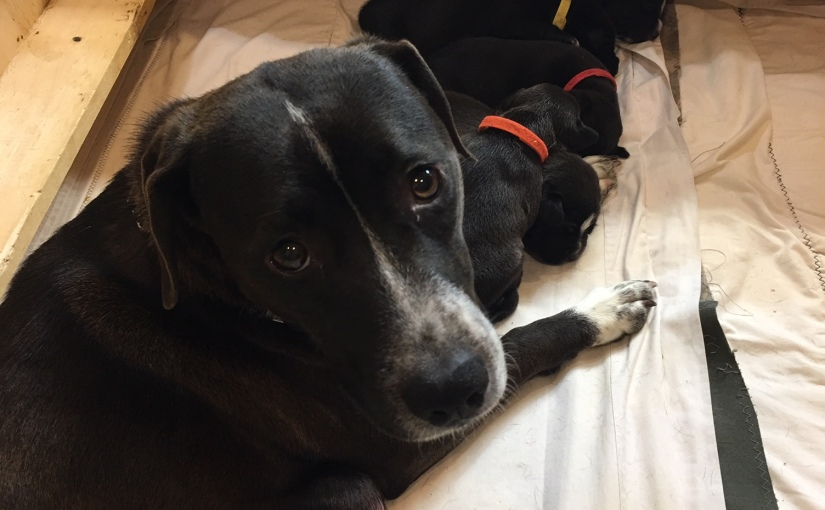 Foster Dog Overwhelm: Saving Dogs Even When Your House (and heart) are Full