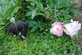 jen in flowers