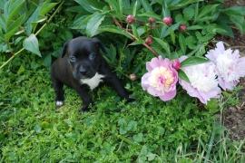 jess in flowers