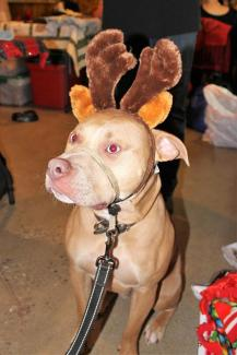 sip for a cause reindeer