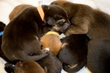 Bell's Puppies-21