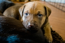 animal rescue puppy saved