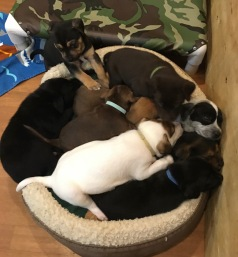 basket of rescue puppies