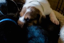 Pups-113