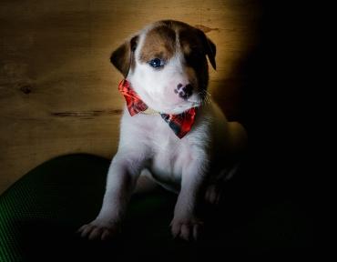 Pups-21