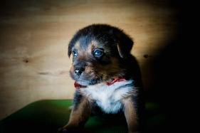 Pups-30