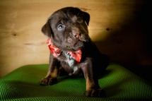 rescue dog for Christmas