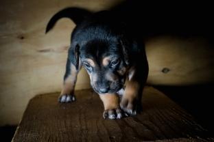 rescue puppy named WaWa