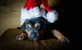 santa rescue puppy