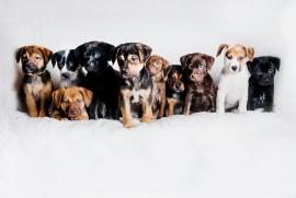 PA pups