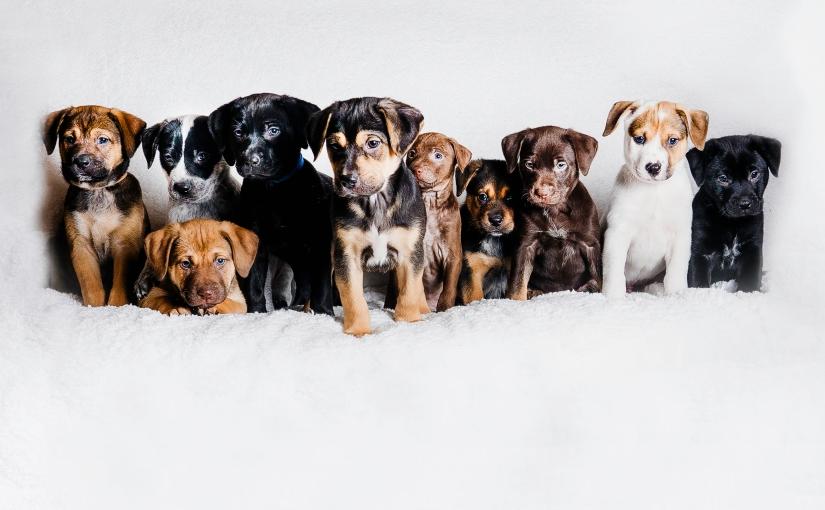 Last Day ofPuppies!