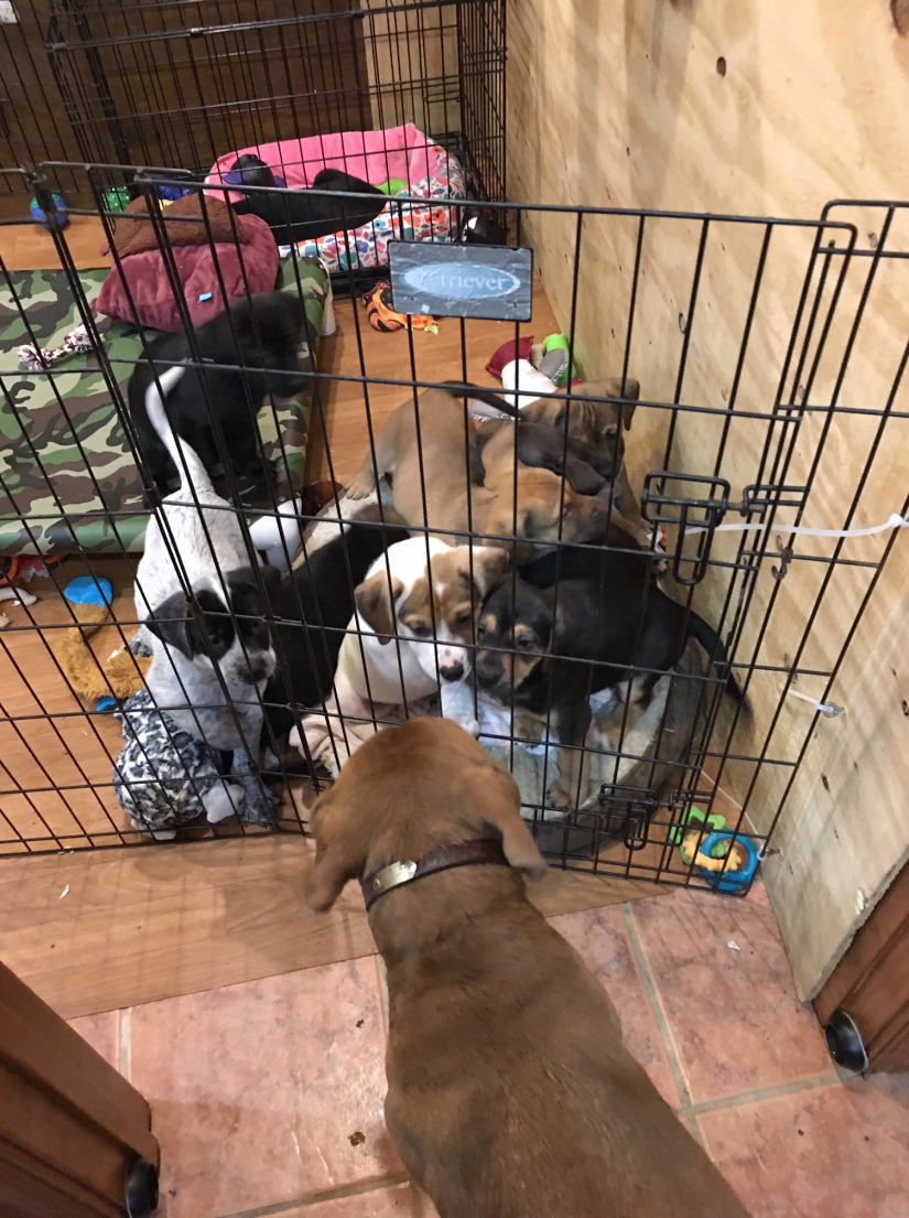 puppies meeting Fanny