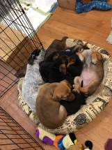 puppies napping