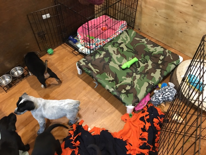 Puppy pen play area