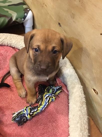 Utz rescue pup sitting
