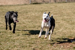Playdate at the dog park with Edith