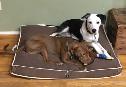 Snuggling on the Frank bed every morning
