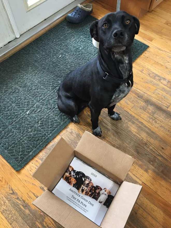 rescue dog calendar
