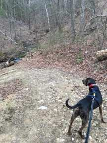 hiking with a hound dog