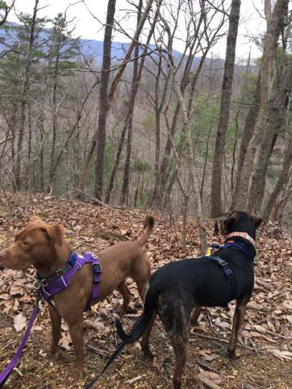 hiking with two dogs