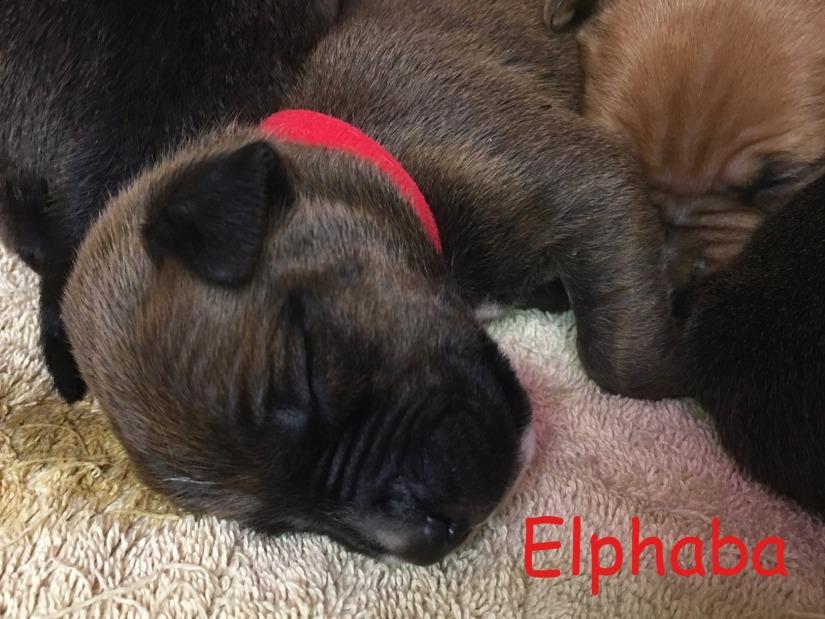 2 week old Elphaba