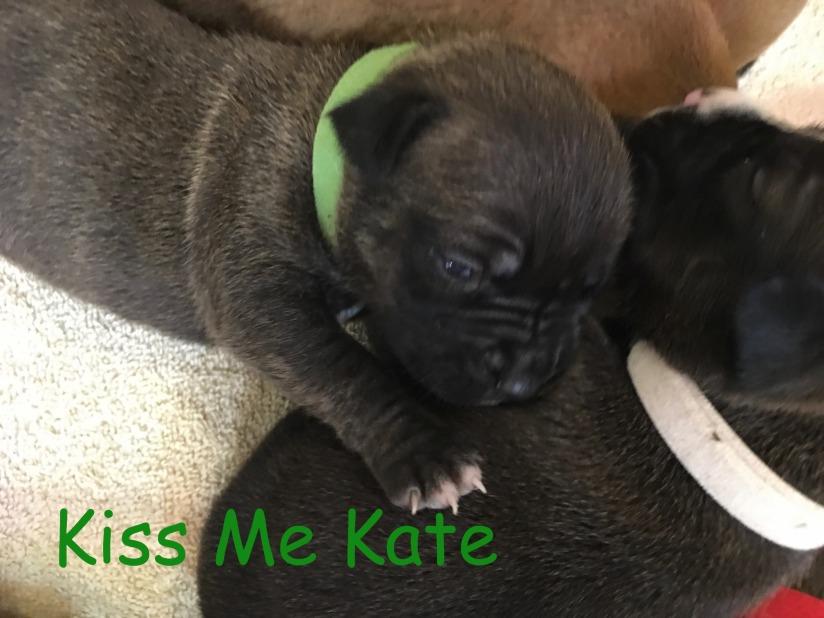 2 week old Kiss Me Kate