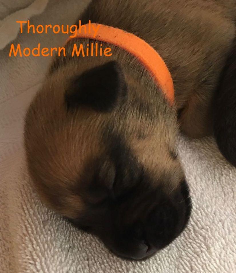 2 week old Millie
