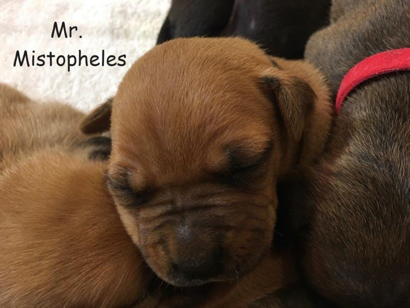 2 week old Mr. Mistopheles