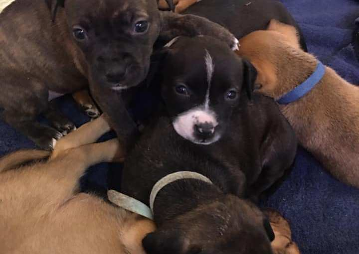 Diary of a Rescue Week Four: A Week of Growing Puppies