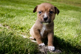 Puppies-73