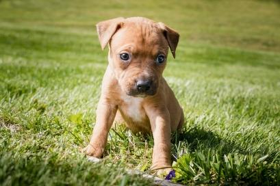 Puppies-78