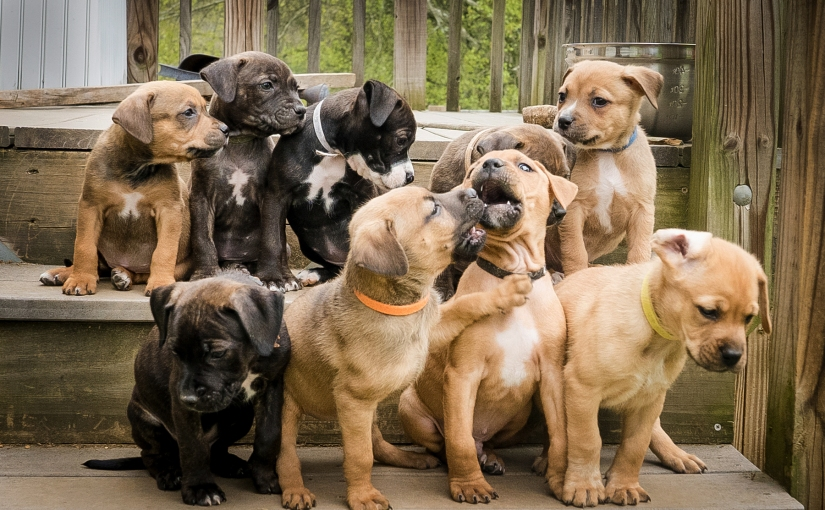 My Hope for ThesePuppies