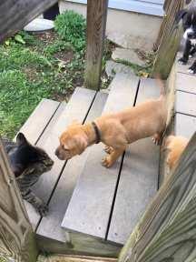 pup meets cat