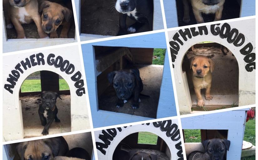 CAUTION: Puppies