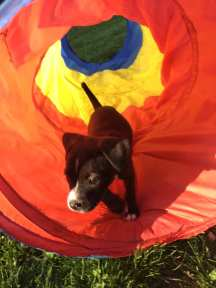 pup runs out of tunnel