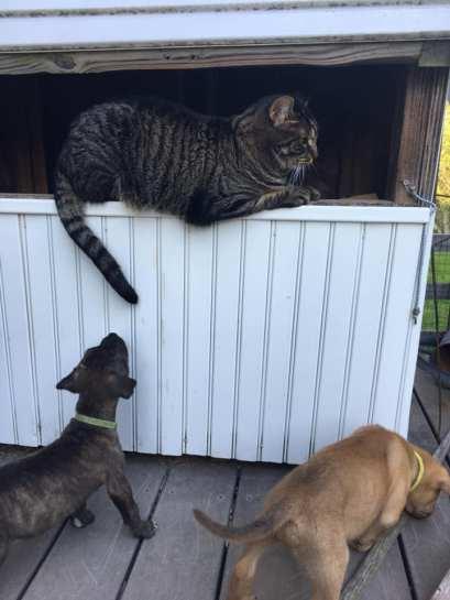 pup sniffs kitty