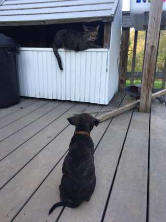 pup watches cat