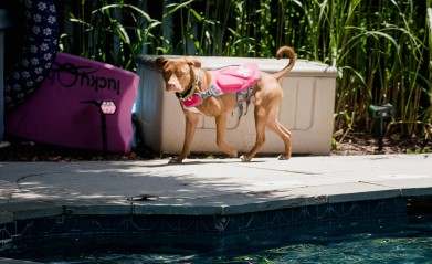 Swim with Fanny and Beau-19